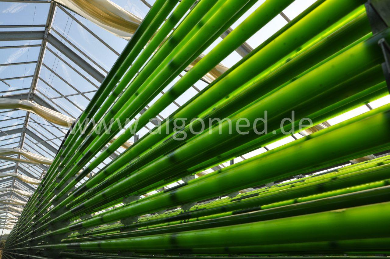 Gewächshaus Photobioreaktor Deutschland, ALGOMED, Roquette Klötze Gmbh & Co. KG