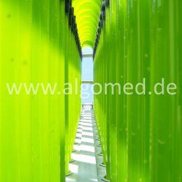 Glasröhren mit Chlorella aus Deutschland, ALGOMED, Roquette Klötze Gmbh & Co. KG