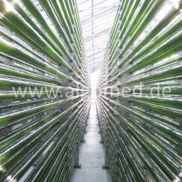 Chlorella Produktionsanlage Deutschland, ALGOMED, Roquette Klötze Gmbh & Co. KG